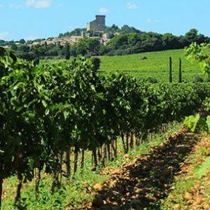 Excursion Avignon Châteauneuf du Pape
